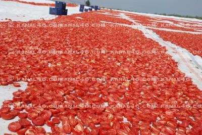 İlk kez sanayi tipi kurutmalık domates üretimi