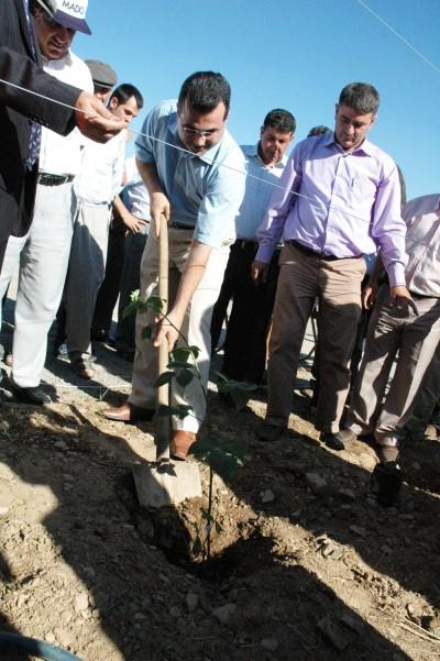 Fatih Kasabası'nda üzümsü bitki atağı
