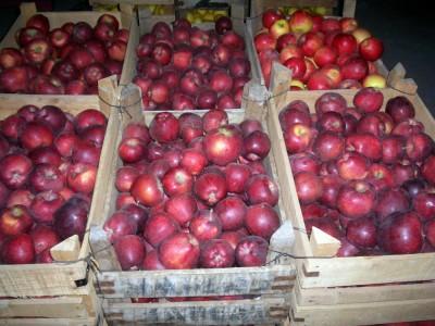 600 ton elma soğuk hava deposuna..