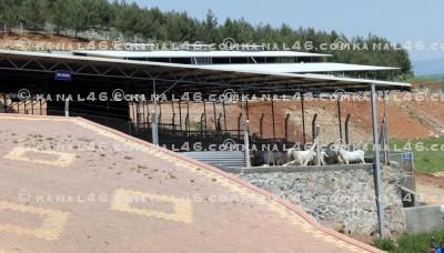 MADO Malezya'ya keçi çiftliği kuruyor