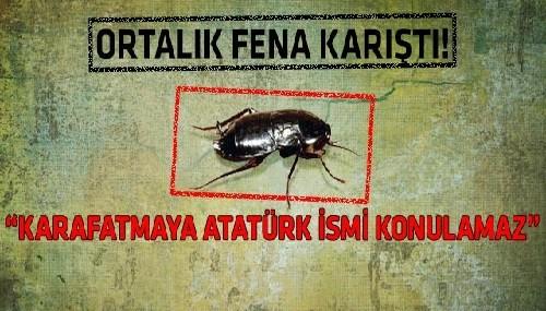 HOPPALA: Böceğe şimdi de Atatürk'ün adını verdiler!
