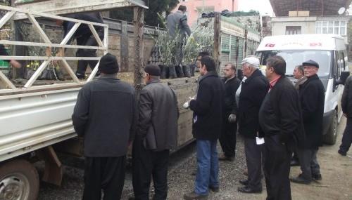 Türkoğlu'nda çiftçilere fidan dağıtımı…