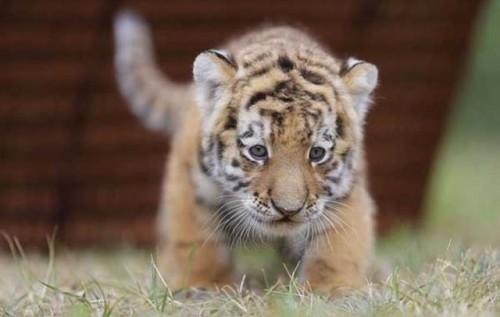 Hayvanat bahçesinin en yeni üyesi…  -VİDEO-