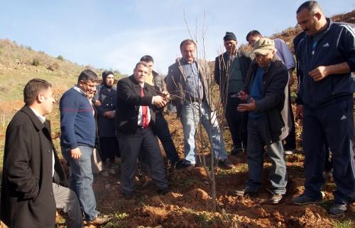 Türkoğlu'nda çiftçilere budama eğitimi verildi..