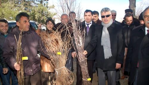 Afşin'de çiftçilere meyve fidanı dağıtıldı..