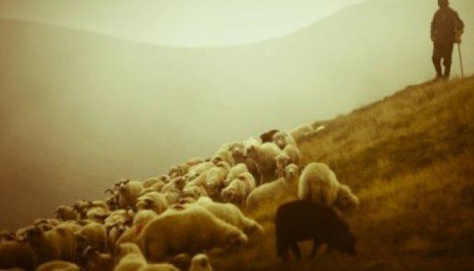 13 yaşındaki çoban av tüfeği ile kendini yaraladı..
