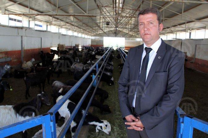 Gaziantep'ten 'damızlık keçi' ihracatı