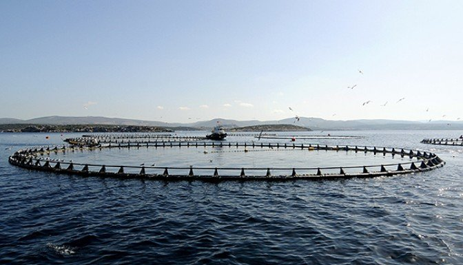 Japonya, 280 adayı kamulaştırıyor