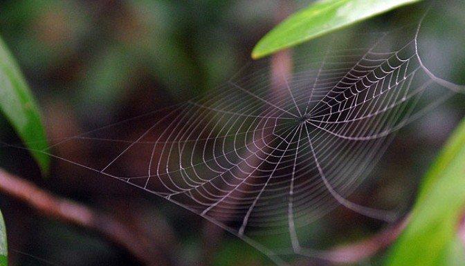Örümcek ağının 'şifresi' çözüldü