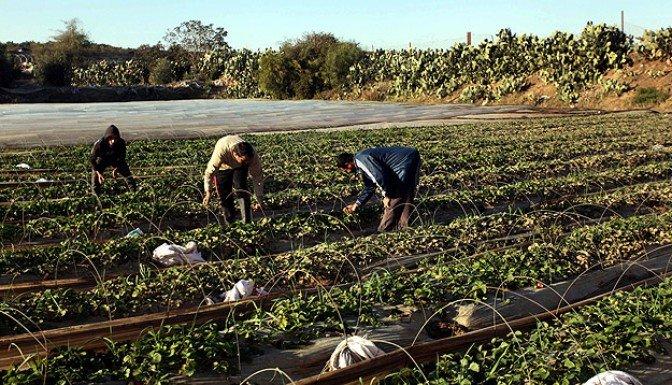 Tarım sektöründe 14 bin kişi eğitilecek
