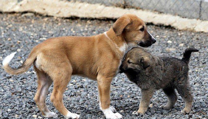 Hayvanlara kötü muameleye 15 bin lira ceza