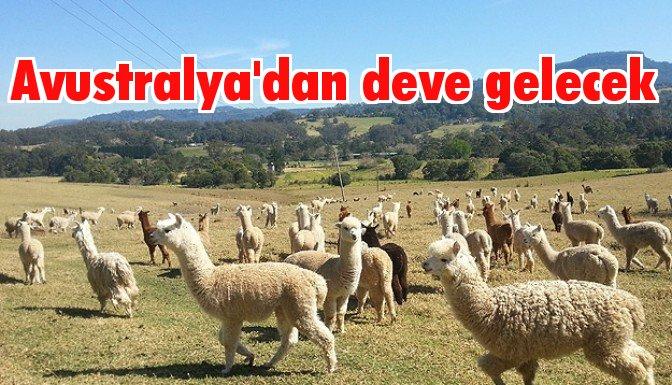 Avustralya develeri Türkiye yolcusu