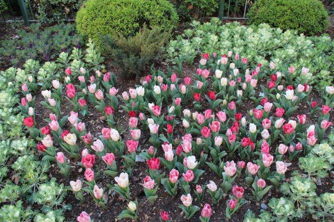 Şehrimiz Çiçeklerle Rengarenk Oldu