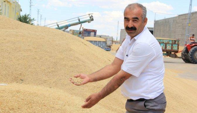 Tahıl ürünlerindeki artış, çiftçiyi sevindirdi
