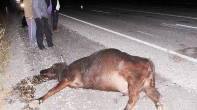 İneğe çarpan otomobilin sürücüsü yaralandı, inek telef oldu