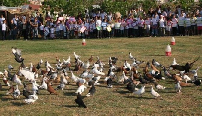 Kahramanmaraş'ta Güvercin festivali...