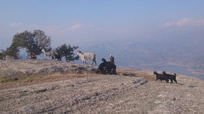 Kurtarma ekipleri mahsur kalan Keçiler için seferber oldu