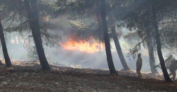 Kahramanmaraş'ta bir günde ikinci orman yangını
