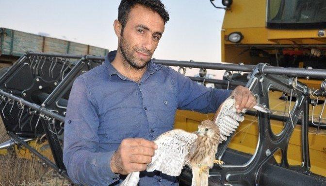 Elbistan'da bulunan kuşu 'İsrail Ajanı' sandılar