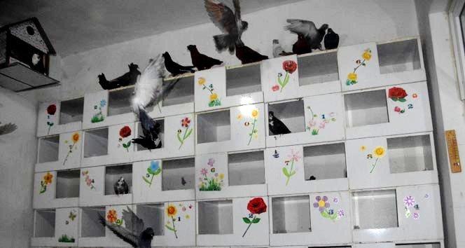 Türkiye'de bir ilk: Güvercin oteli!