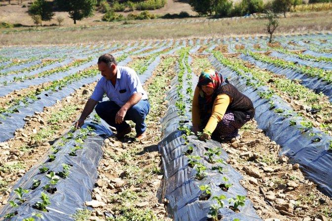Genç Çiftçi Projesi İle Hayaller Gerçek Oluyor!