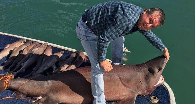 Manavgat'ta 14 köpek balığı yakalandı!