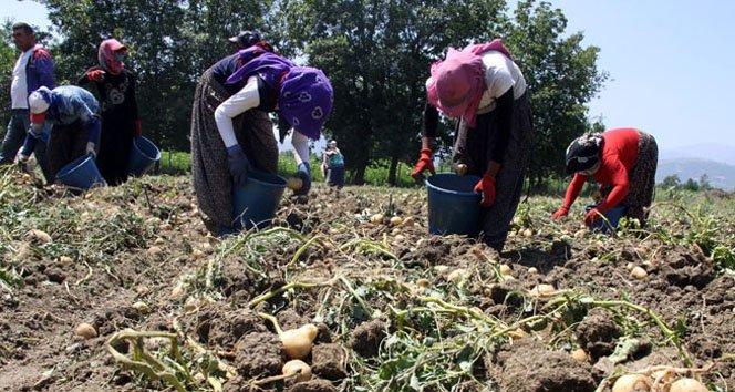 Patatesin destek dışı kalması çiftçiyi üzdü!
