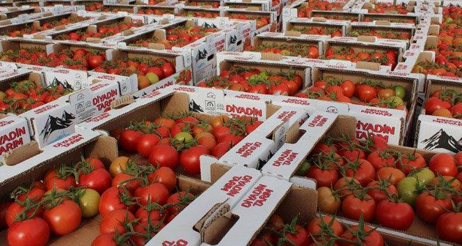 Eksi 40 derecede domates üretiliyor!