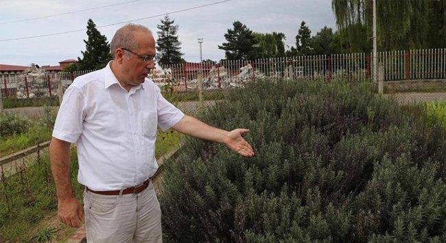 Türkiye bitki cenneti!