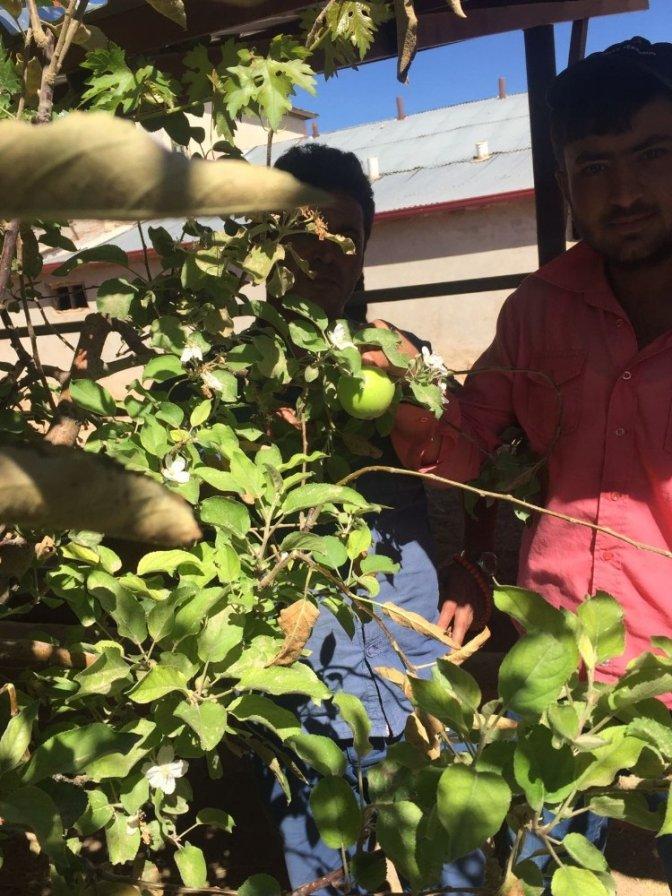 Elma Sonbaharda Çiçek Açtı, Hem de Dalında Meyvesiyle