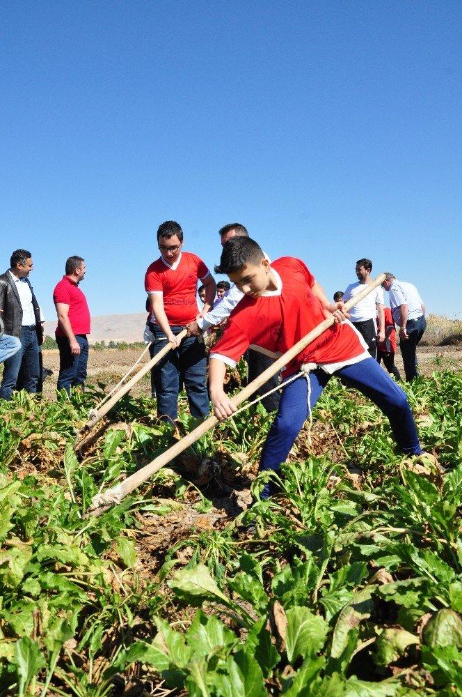 Rizeli Gençler, Elbistan'da Horon Eşliğinde Pancar Söktü