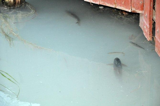 Ceyhan Nehri'nde toplu balık ölümleri yaşandı