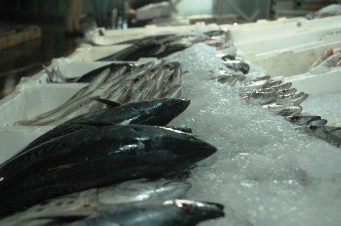 Kahramanmaraş'ta balık fiyatları tavan yaptı