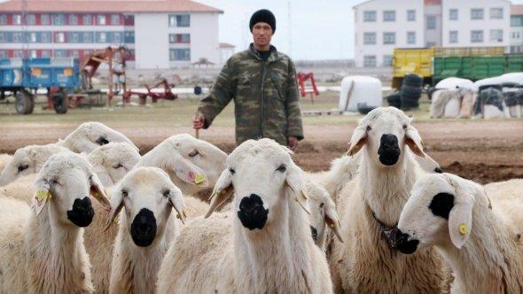 Yerli çoban sıkıntısı Afganlılara istihdam sağladı