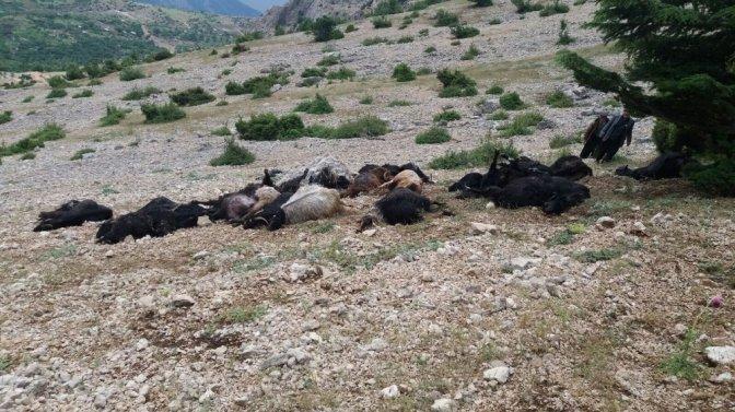 Kahramanmaraş'ta yıldırım düştü: 32 Keçi telef oldu