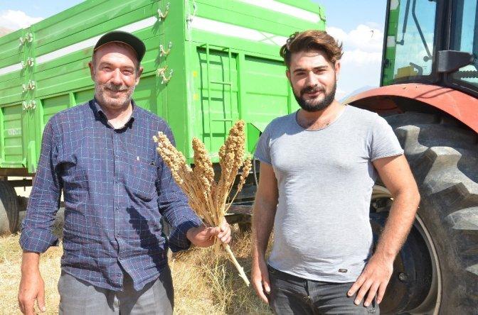 Elbistan'da 'Astronot Gıdası' Kinoanın ilk hasadı yapıldı