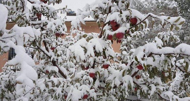 Kar yağışı elma üreticisini hazırlıksız yakaladı