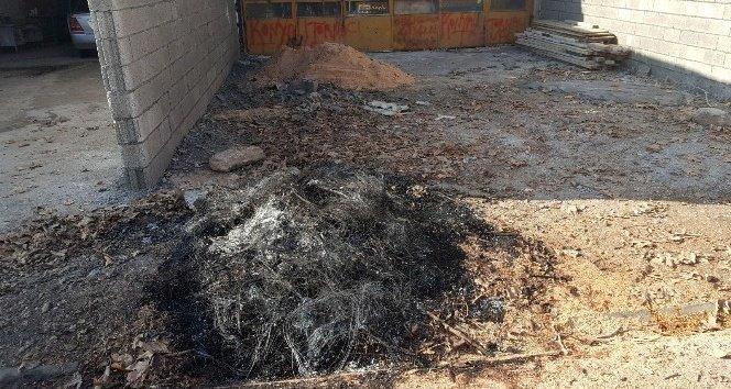 Çınar ağacını kesen esnafa bin lira ceza