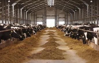 Kahramanmaraş'ta süt üreticisinin yüzünü güldürecek haber!
