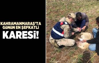 Kahramanmaraş'ta günün en şefkatli karesi!
