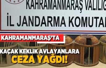 Kahramanmaraş'ta kaçak keklik avlayanlara ceza yağdı!