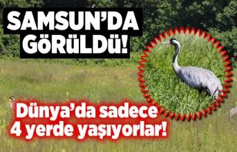 Samsun'da görüldü, Dünya'da sadece 4 yerde yaşıyorlar!