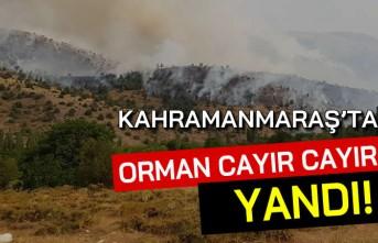 Kahramanmaraş'ta orman cayır cayır yandı!