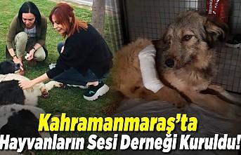 Kahramanmaraş'ta Hayvanların Sesi Derneği Kuruldu!