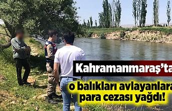 Kahramanmaraş'ta o balıkları avlayanlara ceza yağdı!