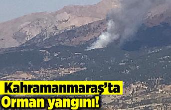 Kahramanmaraş'ta orman yangını!