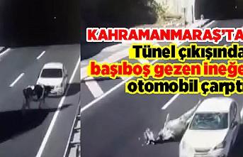 Tünel çıkışında başıboş gezen ineğe otomobil çarptı
