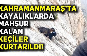 Kahramanmaraş'ta kayalıklarda mahsur kalan keçiler kurtarıldı!
