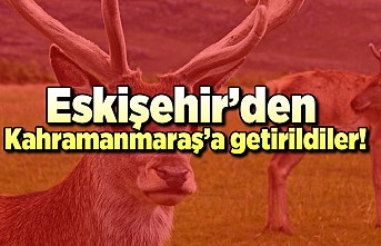 Eskişehir'den Kahramanmaraş'a getirildiler!