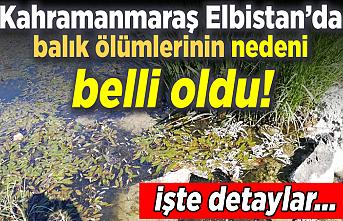 Kahramanmaraş Elbistan'da balık ölümlerinin nedeni belli oldu!